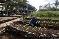 Una trabajadora de la finca Marta, impulsada por uno de los históricos promotores de la agroecología en Cuba