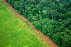 La deforestaci
