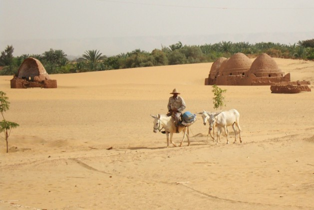The-water-table-is-falling-in-Egypts-desert-oases-raising-questions-of-sustainability_Cam-McGrath-629x420-629x420-629x420